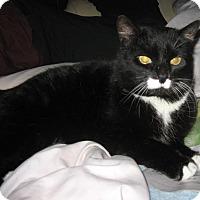 Adopt A Pet :: chica - brewerton, NY