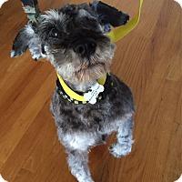 Adopt A Pet :: Jack - Redondo Beach, CA