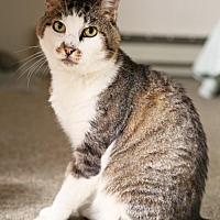 Adopt A Pet :: Trevor - Oakland, CA