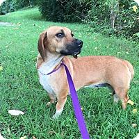 Adopt A Pet :: Bessie (Reduced Fee) - Brattleboro, VT