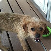 Adopt A Pet :: Jack - Chewelah, WA