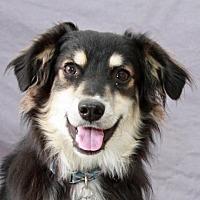 Adopt A Pet :: Brady - Modesto, CA