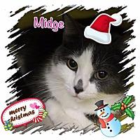 Adopt A Pet :: Midge - Harrisburg, NC