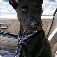Adopt A Pet :: Leila - High Point, NC