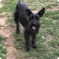 Adopt A Pet :: Dodger - Jennings, OK