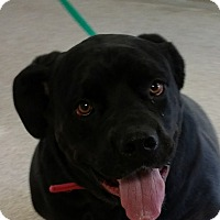 Adopt A Pet :: Karma - Troy, OH