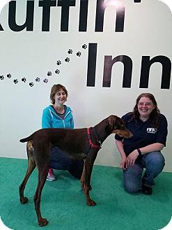 Doberman Pinscher Dog for adoption in Buffalo, Minnesota - Leia