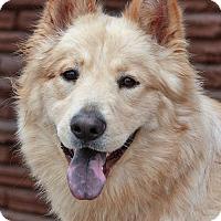 Adopt A Pet :: Bear von Jena - Los Angeles, CA