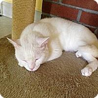 Adopt A Pet :: Lamar - Lancaster, MA