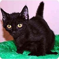 Adopt A Pet :: Georgie Boy - Colmar, PA