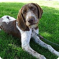 Adopt A Pet :: Chantellie big soul - Sacramento, CA