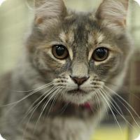 Adopt A Pet :: Nora - Sacramento, CA