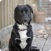 Adopt A Pet :: Bandit - Cumming, GA