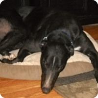 Adopt A Pet :: Run Away Russell - Knoxville, TN