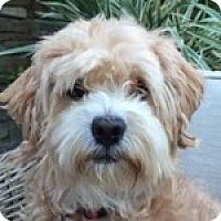 Adopt A Pet :: Starr - La Costa, CA