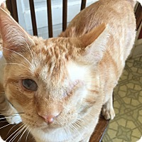 Adopt A Pet :: Jasper - Colmar, PA