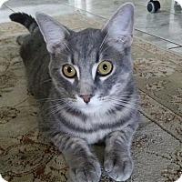 Adopt A Pet :: Porter the cuddlebug - Los Angeles, CA