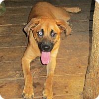 Adopt A Pet :: JAVA - Brookside, NJ