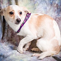 Adopt A Pet :: PEDRO - Anna, IL