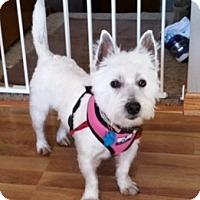 Adopt A Pet :: Macey-Pending Adoption - Omaha, NE