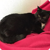 Adopt A Pet :: Bertha - China, MI