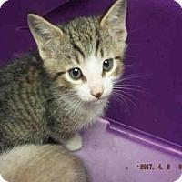 Adopt A Pet :: A573242 - Oroville, CA