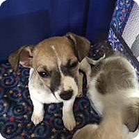Adopt A Pet :: Edwin - Ashville, OH