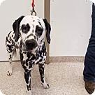 Adopt A Pet :: NELLIE