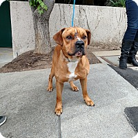 Adopt A Pet :: Carmichael - Beverly Hills, CA