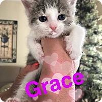 Adopt A Pet :: Grace - Austintown, OH