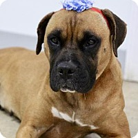 Adopt A Pet :: Harley - Picayune, MS