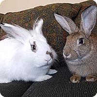 Adopt A Pet :: Rhett & Butler - North Gower, ON