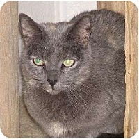 Domestic Shorthair Cat for adoption in Woodstock, Illinois - Lily B