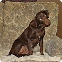 Adopt A Pet :: Autumn - Lewisville, IN