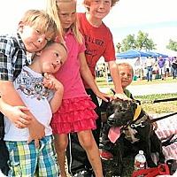 Adopt A Pet :: Lyla (courtesy post) - Scottsdale, AZ