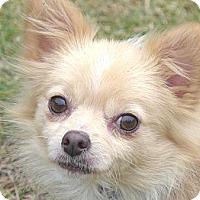 Adopt A Pet :: Chelsie - Mocksville, NC