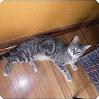 Adopt A Pet :: Georgia - Warren, MI