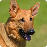 Adopt A Pet :: Reese - Dacula, GA