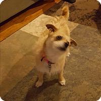 Adopt A Pet :: Jasmine - Marietta, GA
