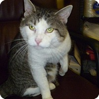 Adopt A Pet :: Tiny Tim - Hamburg, NY