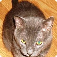 Adopt A Pet :: Oscar - brewerton, NY