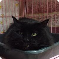 Adopt A Pet :: Tucker - Orleans, VT