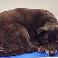 Adopt A Pet :: Yogi Bear **In a foster home** - Breinigsville, PA