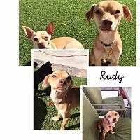 Adopt A Pet :: Rudy aka Rudolph - Las Vegas, NV