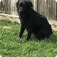 Adopt A Pet :: Farrah - Humble, TX
