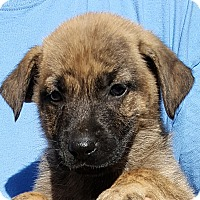 Adopt A Pet :: Thanos - Colonial Heights, VA