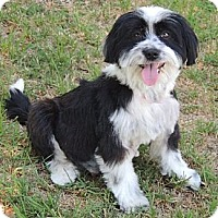 Adopt A Pet :: Kaycee - La Habra Heights, CA