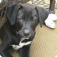 Adopt A Pet :: April - Humboldt, TN