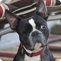 Adopt A Pet :: BENNY - North Augusta, SC