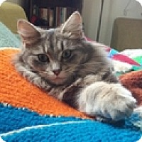 Adopt A Pet :: Sheila - Vancouver, BC